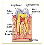 Bild zur Zahnkunde